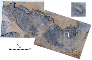 earliest human footprints outside Africa PLOS ONE