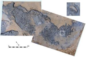 earliest human footprints outside Africa PLOS ONE