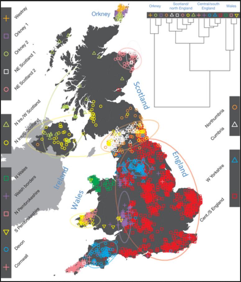 celt gene map