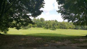 Propect Park long meadow