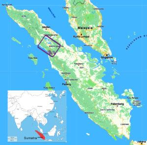 New Great Ape Species Sumatra inset map