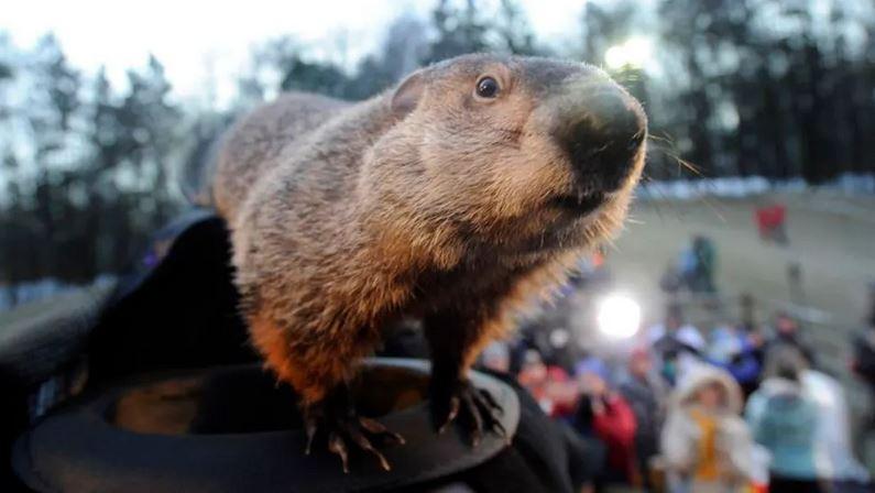 Groundhog onemanz.com